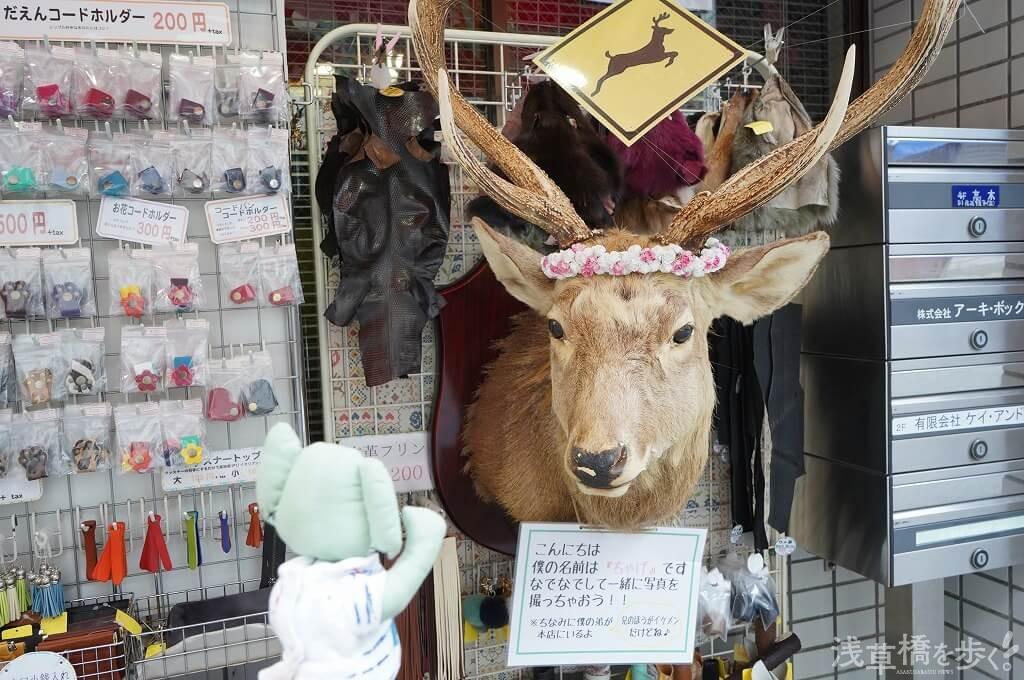 なんと、鹿さんがいる!