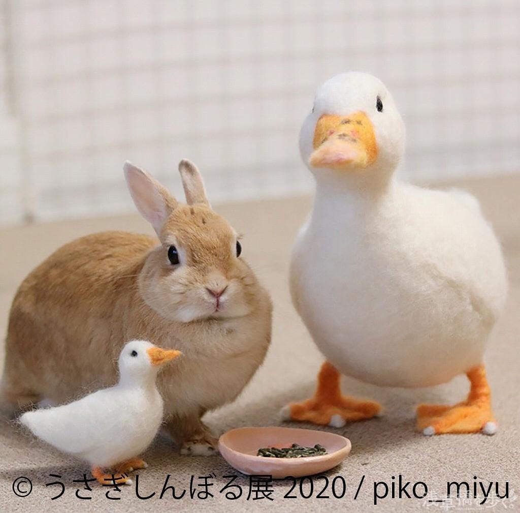 羊毛フェルト作家のpiko_miyuは物販展示も楽しみ!