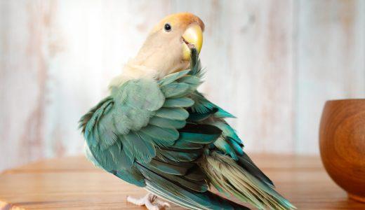 『鳥物語トリストーリー展2021』4/2(金)から浅草橋TODAYS GALLERY STUDIO.で開催